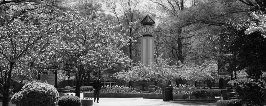 Clock tower through view of flowers
