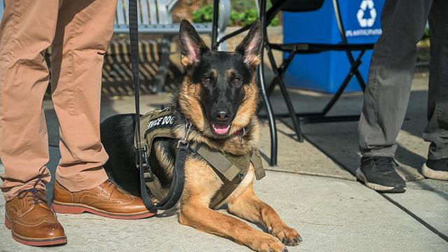 K-9 service dog Keen accompanies Kean student-veteran Jason Pryor