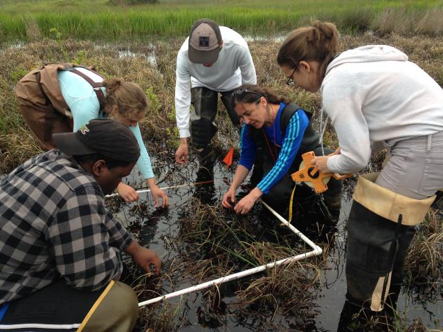 Students and faculty doing research in a swamp